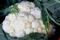 cauliflower-543700__340