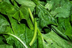 spinach-3463248__340