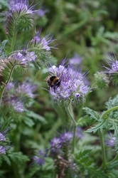 bees-3654572__340
