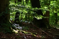 forest-3535825__340